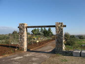 Article - The Grove of Light Project - Neot Kedumim
